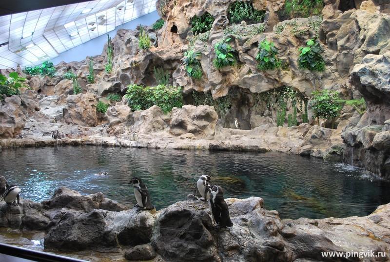 loropark_pingvinarium_08