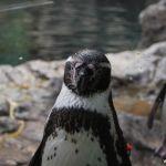 loropark_pingvinarium_01