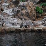 loropark_pingvinarium_02
