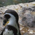 loropark_pingvinarium_04
