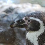 loropark_pingvinarium_05