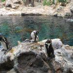 loropark_pingvinarium_07