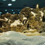 loropark_pingvinarium_09