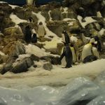 loropark_pingvinarium_10