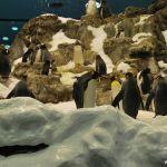 loropark_pingvinarium_13