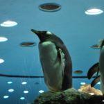 loropark_pingvinarium_25
