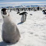 antarctic4