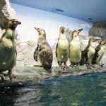 pingvinarium_04