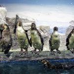 pingvinarium_05