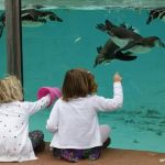 pingvin_zoopark_london_06